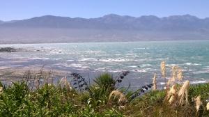 Kaikoura2 NZ