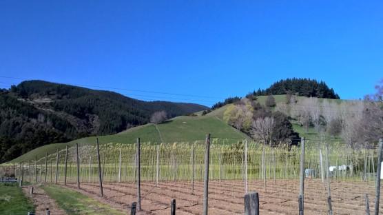 Hops farm